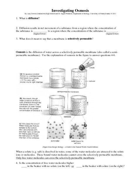 Osmosis Worksheet Answers Diffusion And Osmosis Worksheet Osmosis