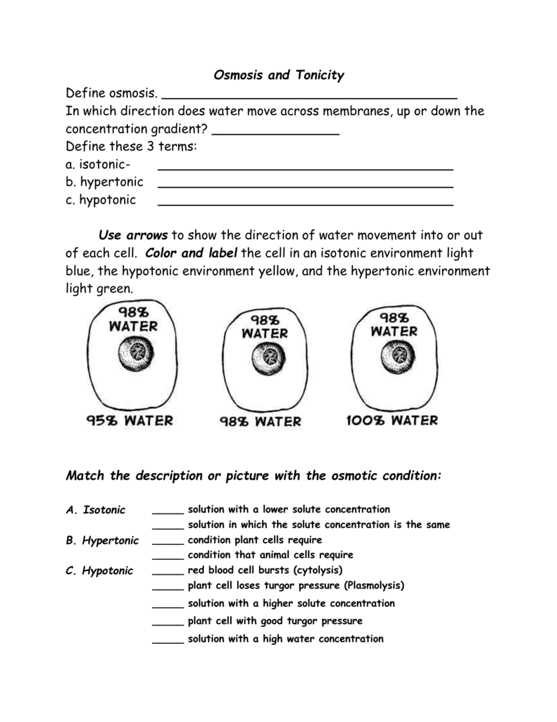 Osmosis Worksheet Biology The Best Worksheets Image Collection