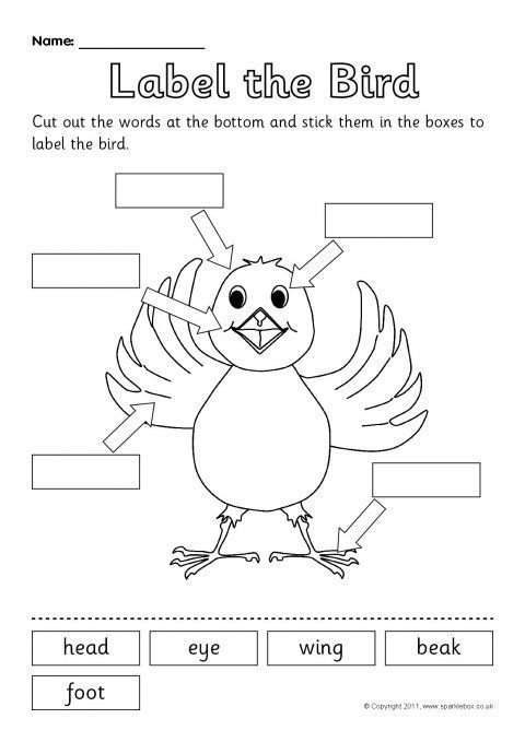 Parts Of A Bird Worksheet The Best Worksheets Image Collection