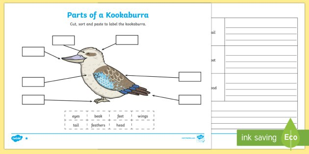 Parts Of A Kookaburra Worksheet   Activity Sheets