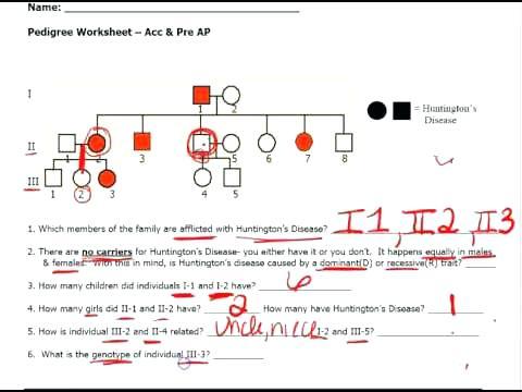 Pedigree Worksheet Answers Genetics Pedigree Worksheet Genetics
