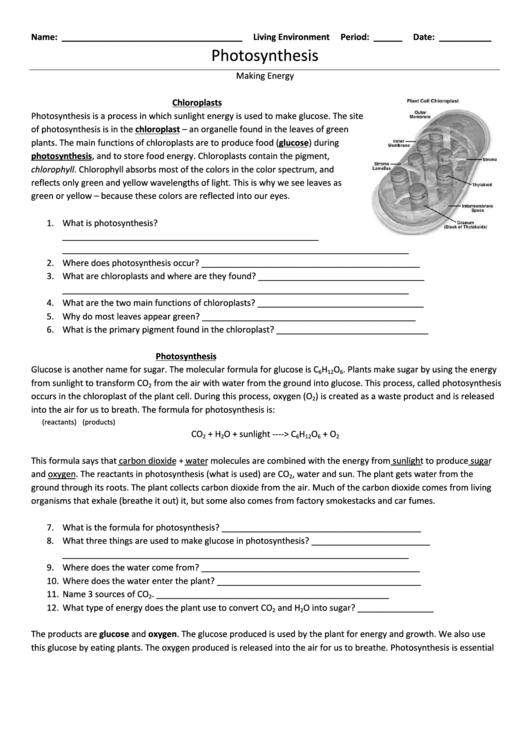 Photosynthesis Making Energy Worksheet Answers