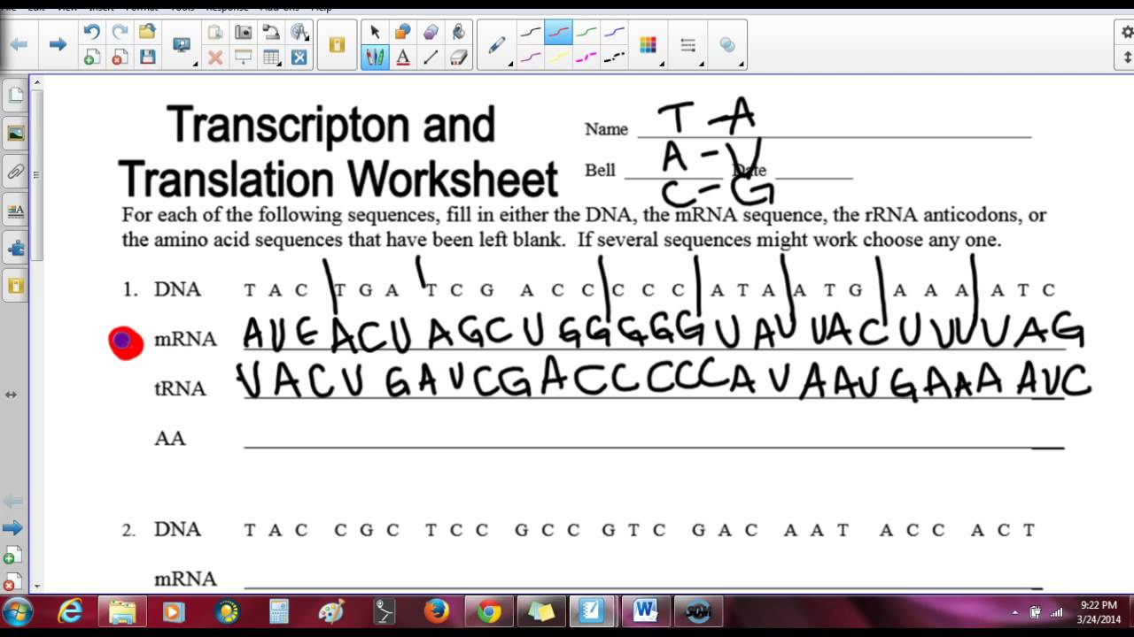 Replication Transcription And Translation Practice Worksheet