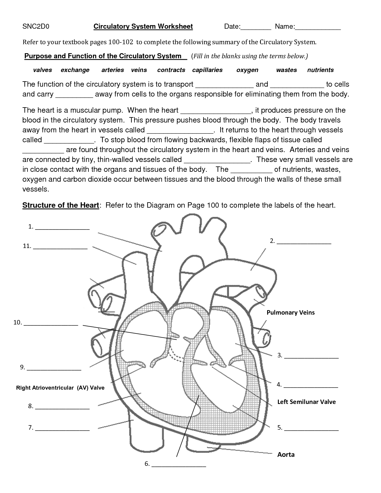 The Circulatory System Worksheet The Best Worksheets Image