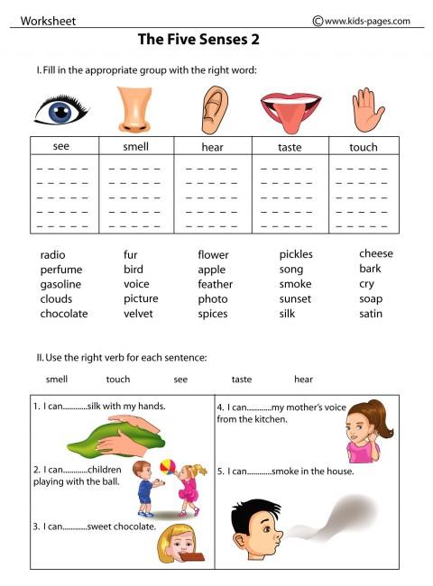 The Five Senses 2 Worksheet