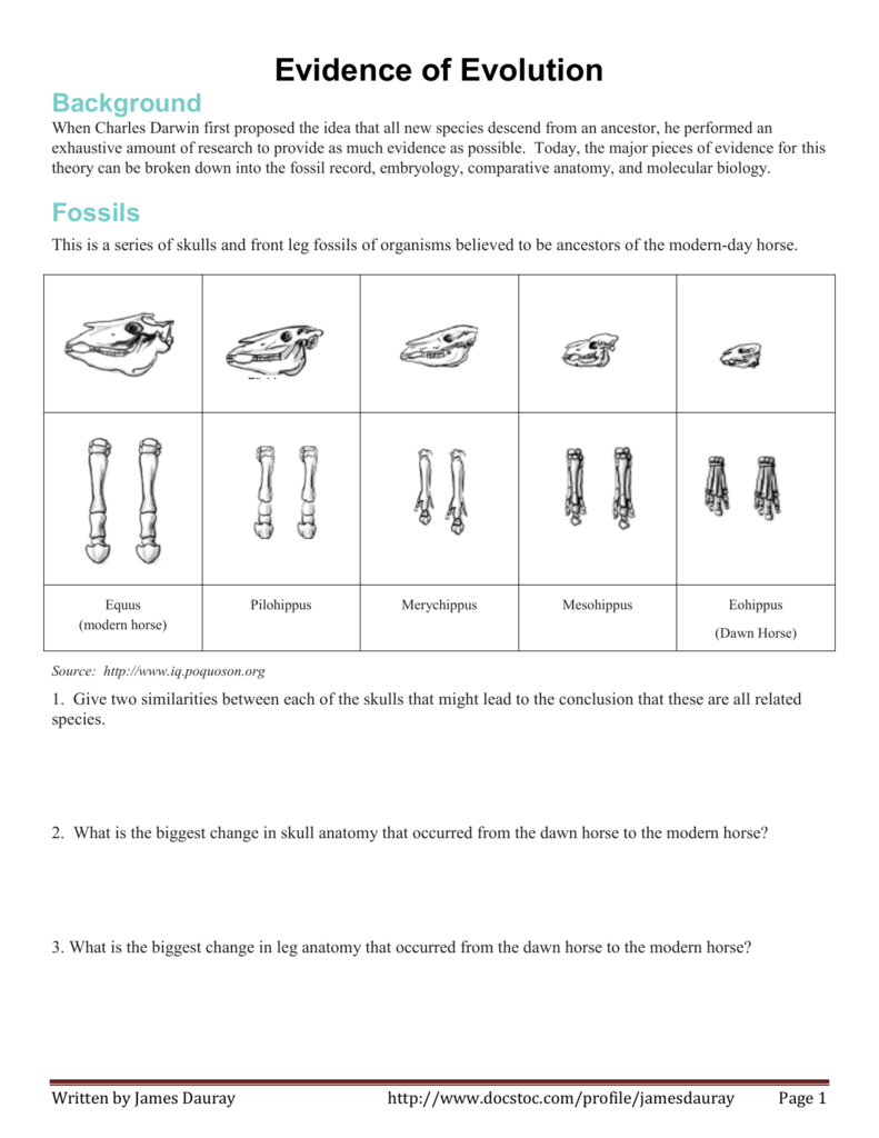 The Fossil Record Worksheet Answer Key Evidence For Evolution