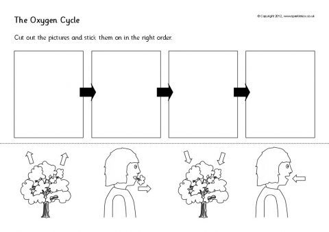 The Oxygen Cycle Cut And Stick (sb8191)