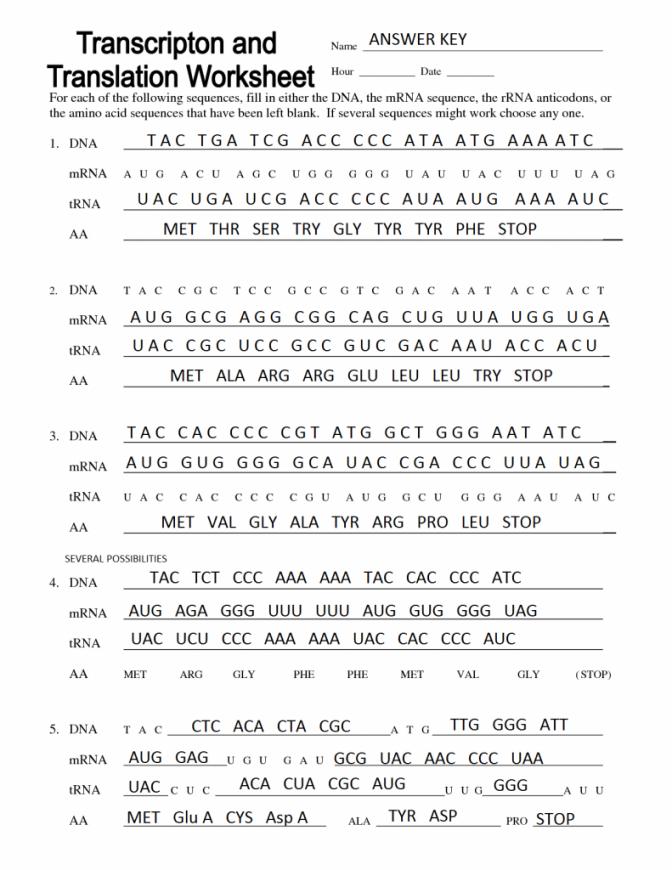 Transcription Translation Worksheets Answer Key
