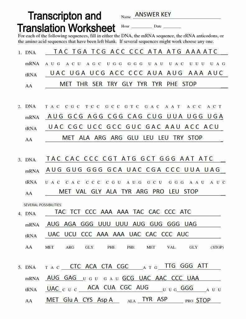 Transcription And Translation Worksheet Answers Homework