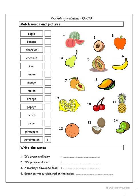 Vocabulary Matching Worksheet
