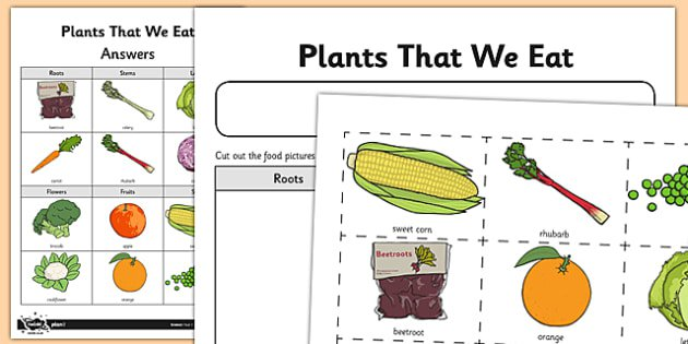 Worksheet   Activity Sheet Plant Parts We Eat