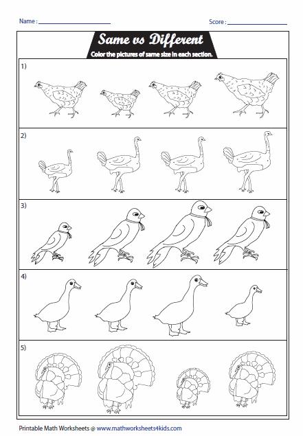 Worksheets For Same And Different For Kindergarten 38577