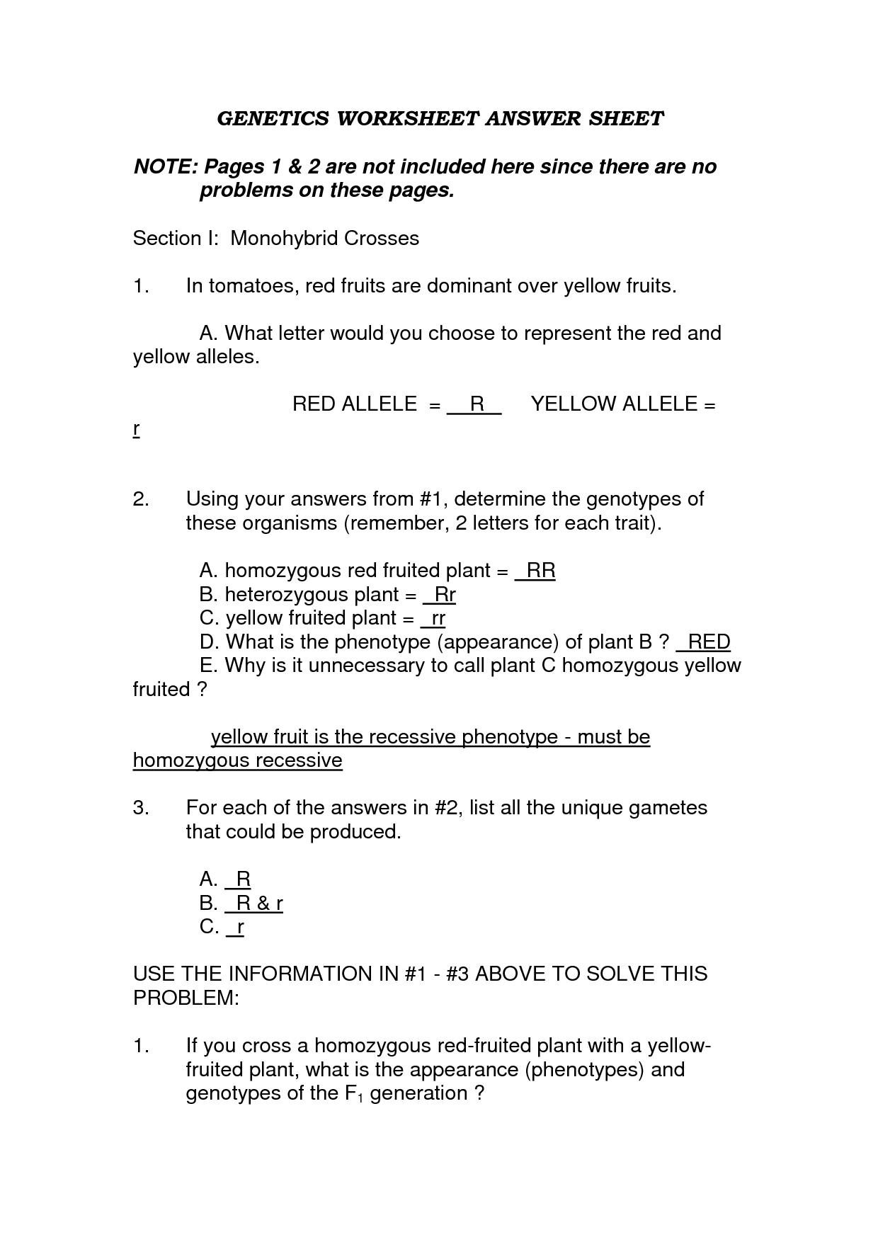 Monohybrid Cross Worksheets Answers Key