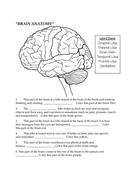 36 Parts Of The Brain Worksheet, Free Coloring Pages Of Eye
