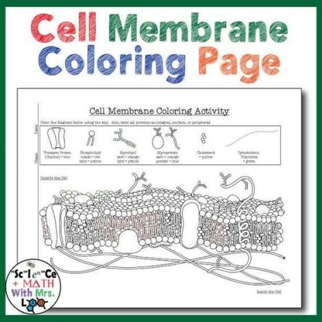 47 Awesome Cell Membrane Coloring Worksheet Answers