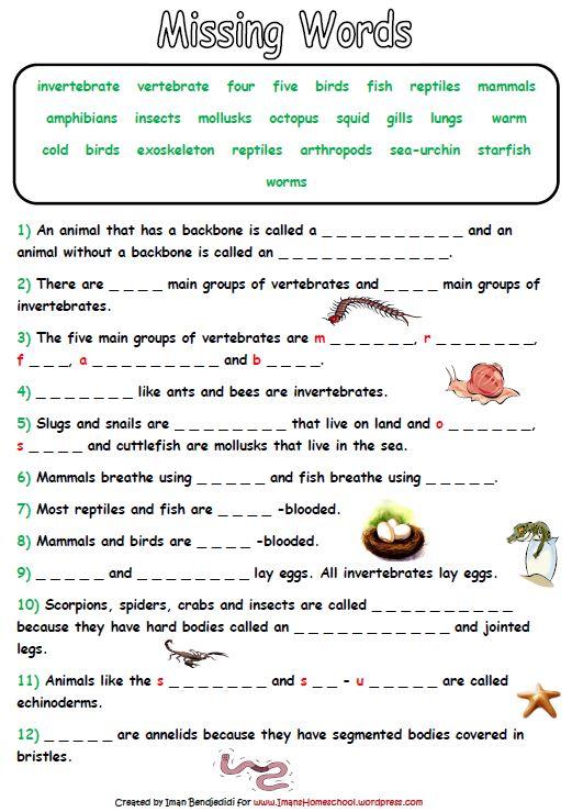 Animal Kingdom Worksheets For Kindergarten  891959