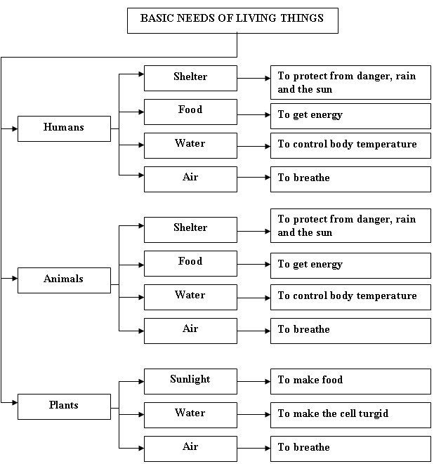 Basic Needs Of Living Things Worksheets Images