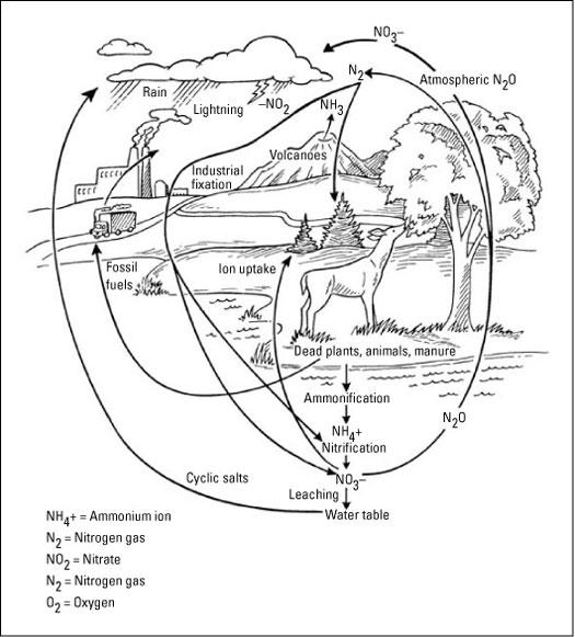 Biogeochemical Cycle Worksheet The Best Worksheets Image