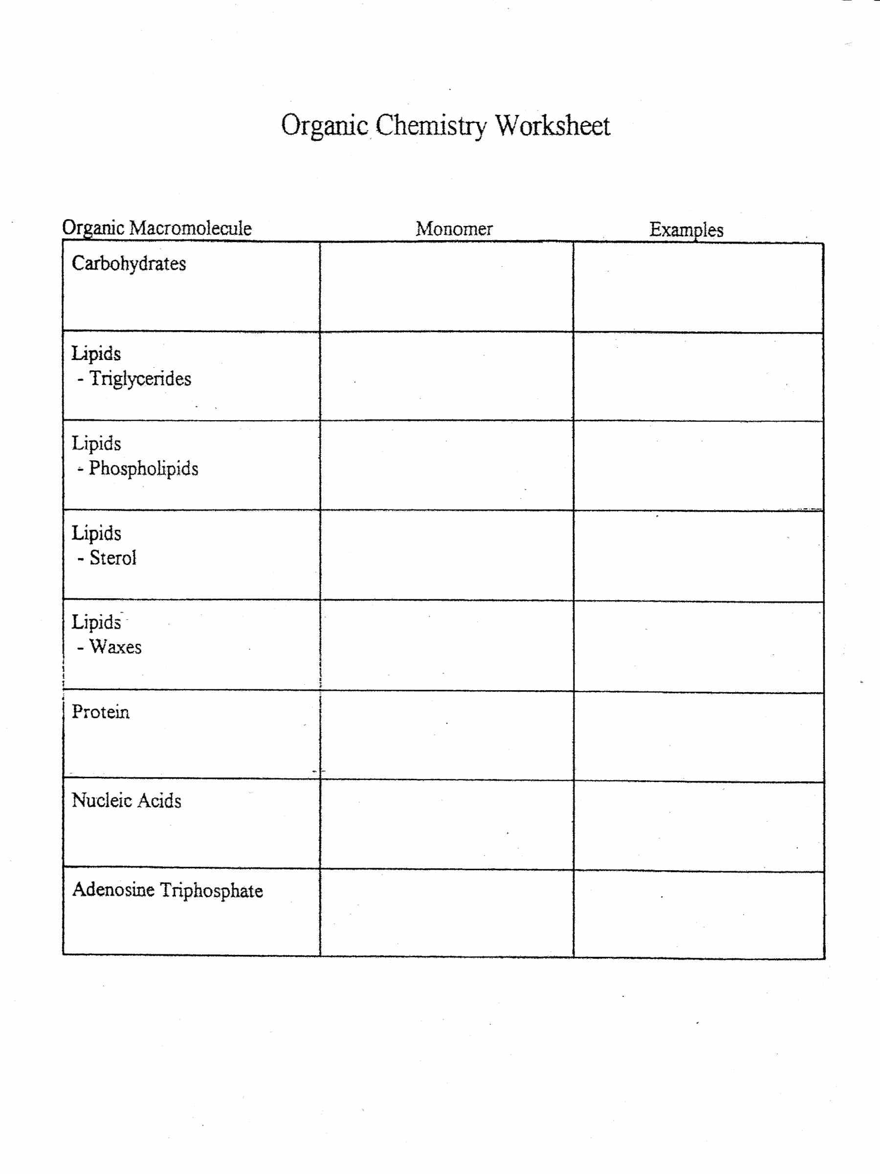 Biomolecule Worksheet