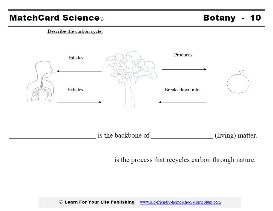 Carbon Cycle, Water Carbon And Nitrogen Cycle Worksheet Answers