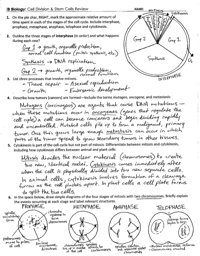 Cell Division And Reproduction Worksheet Answers 154899