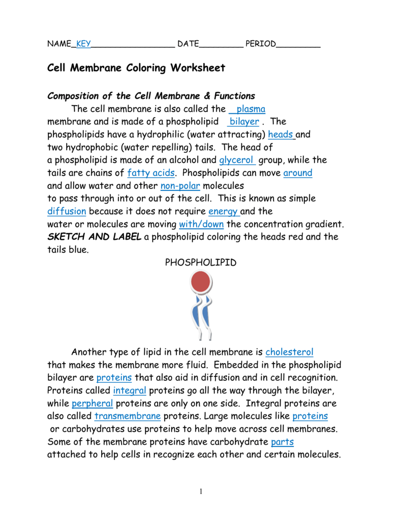 Cell Membrane Coloring Worksheet Answers  1421054