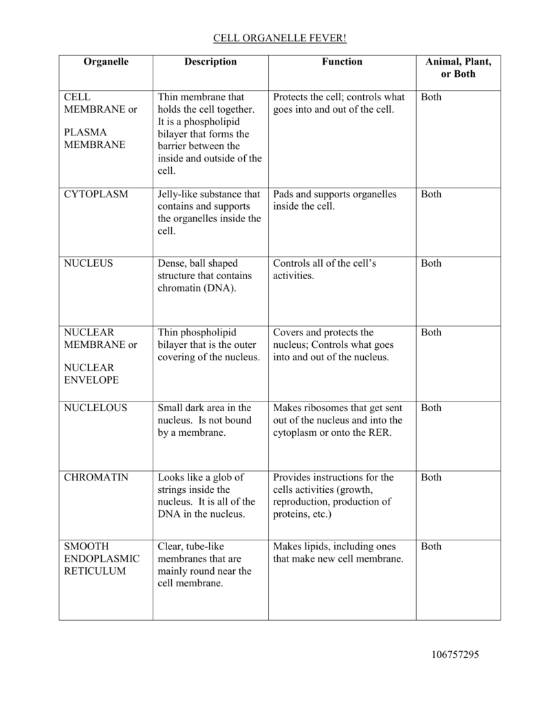 Cell Organelle Crossworduzzle Worksheet Answers Answer Keydf