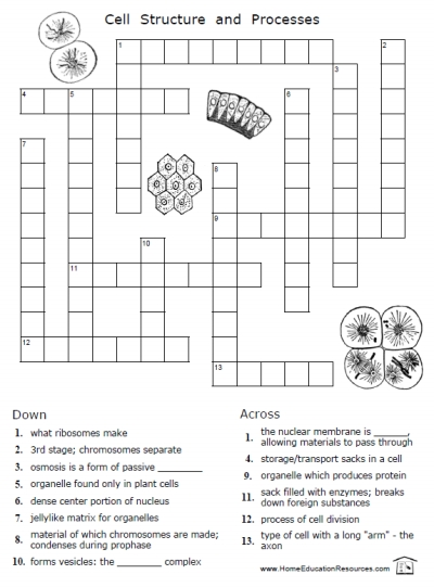Cells For Kids Worksheets The Best Worksheets Image Collection
