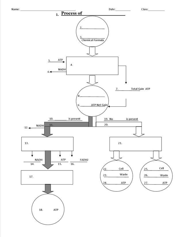 Cellular Respiration Flow Chart Worksheet Inspirational 1energy T