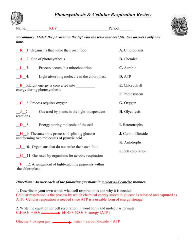 Cellular Respiration Worksheet Key 970161