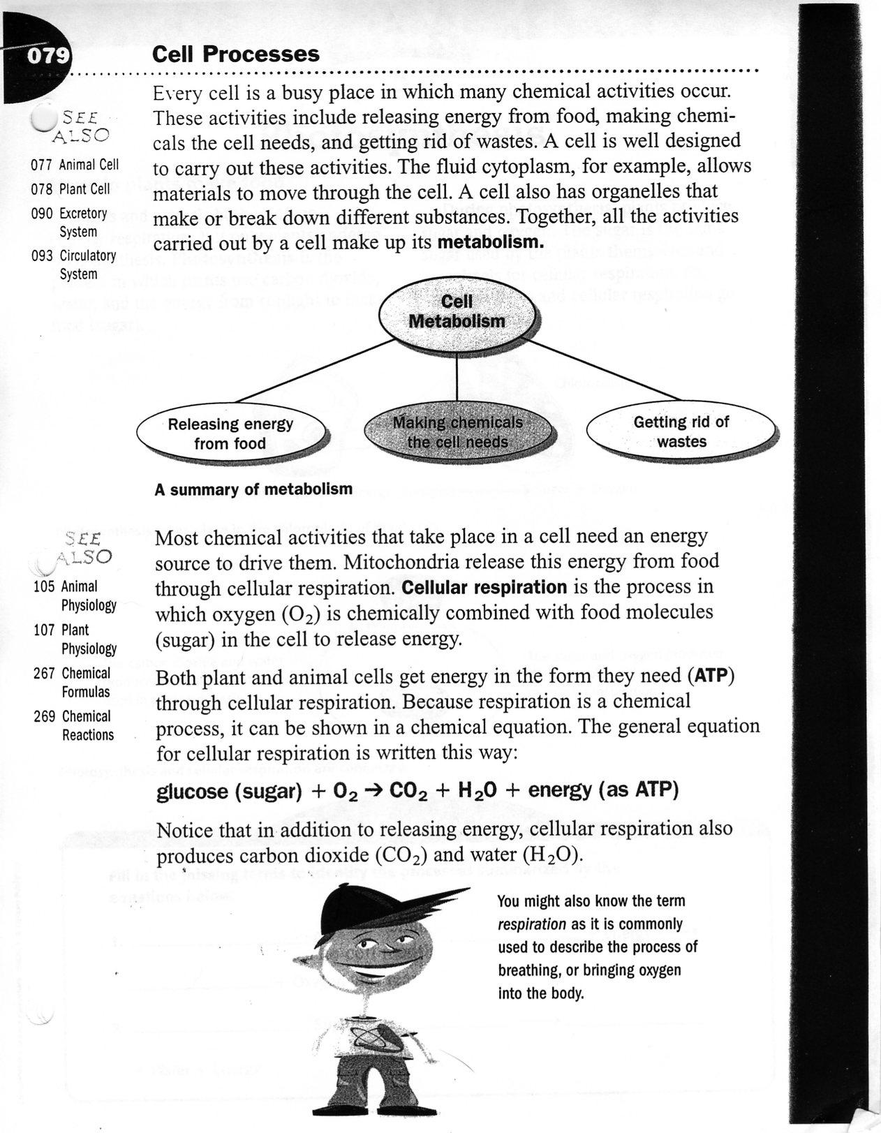 Cellular Respiration Worksheet Middle School 8368