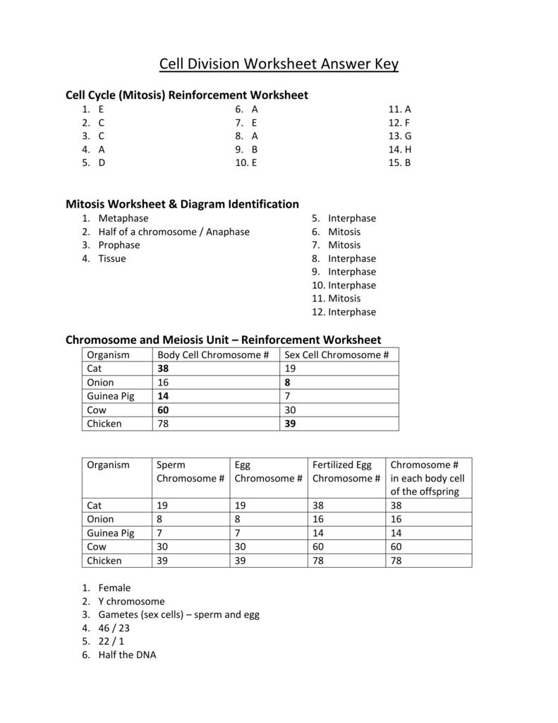 Chromosome Worksheet Answer Key