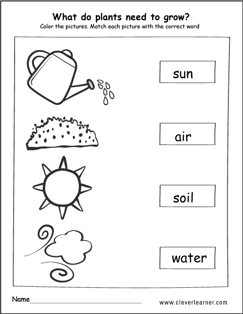 Collection Of Animal Needs Worksheets For Kindergarten