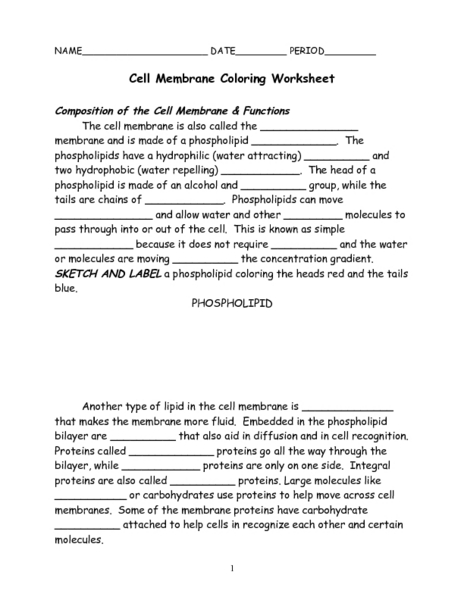 Collection Of Cell Membrane Coloring Worksheet Answers