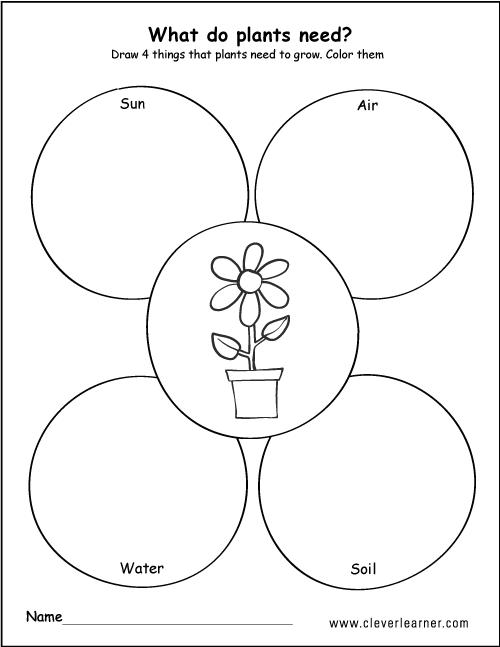 Collection Of Plants Needs Worksheets For Kindergarten