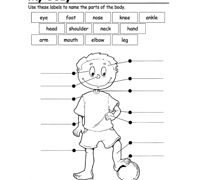 Collection Of Worksheets About Parts Of The Body For Kindergarten