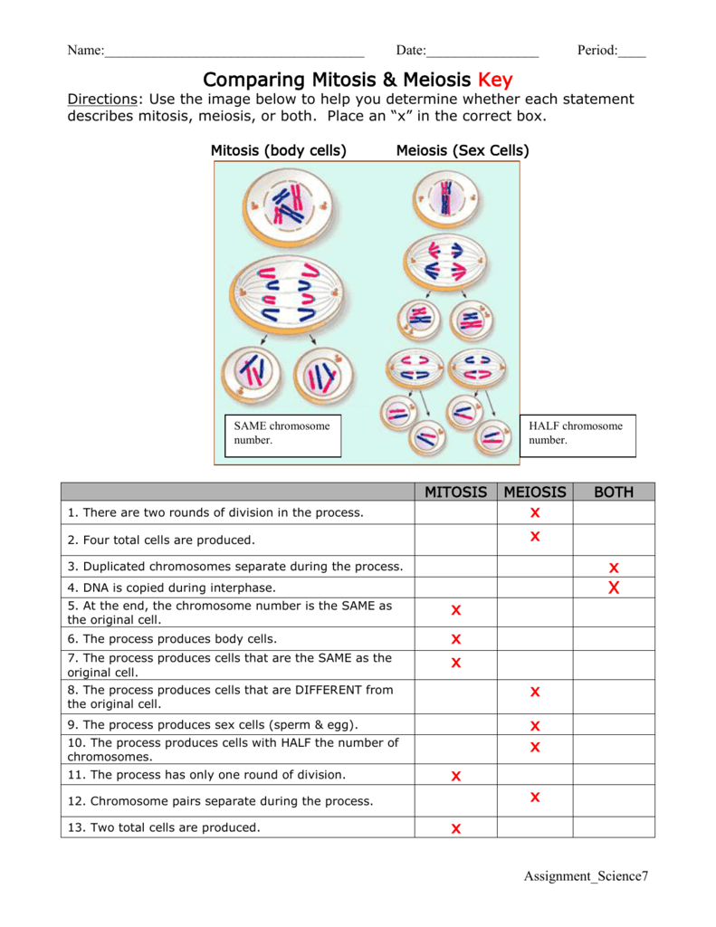 Comparing Mitosis And Meiosis Worksheet Key 651825