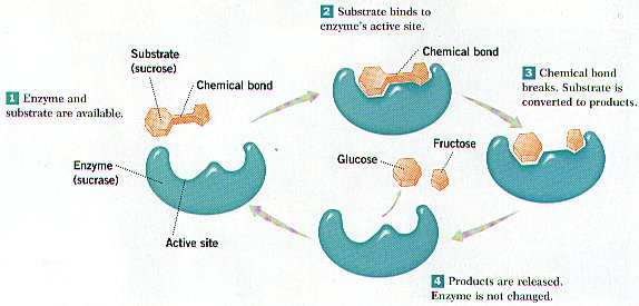 Cosbiology   Lesson 3