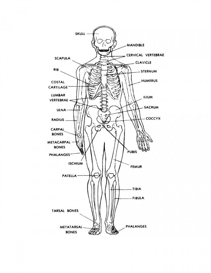 Dem Bones Worksheet 347998