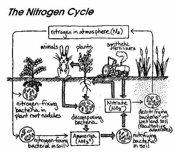 Diagram Of The Carbon Cycle Worksheet Fresh 40 Impressive Carbon