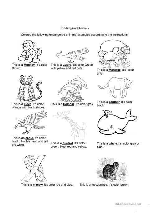 Endangered Animals Worksheet