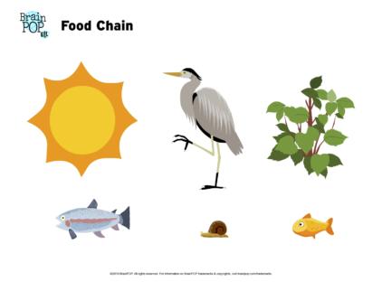 Food Chain Image Worksheet