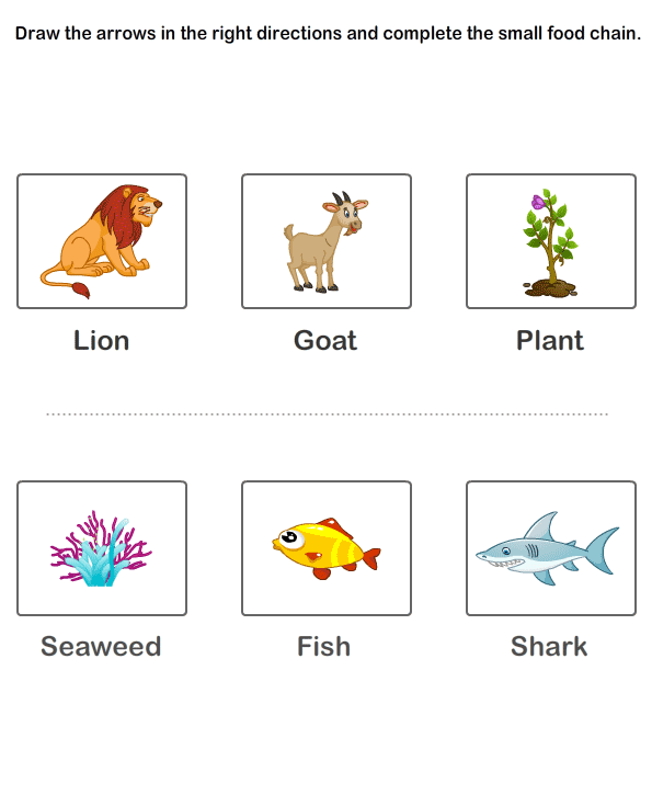 Food Chain Worksheet 1st Grade  200461