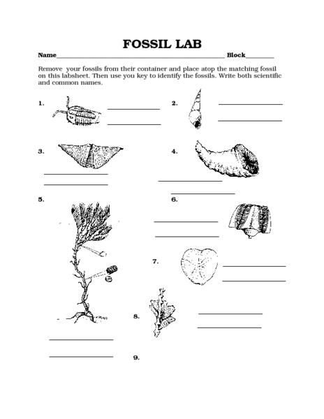 Fossils Worksheets Davezan, Fossil Worksheets
