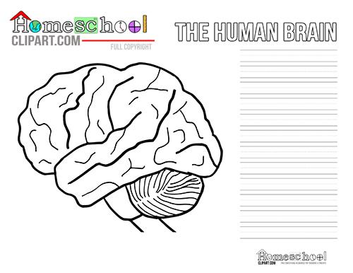 Human Brain Clipart, Coloring & Worksheets