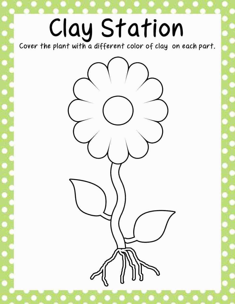 Kindergarten Growing Plants Worksheets 1065856