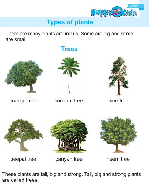 Kindergarten Science Types Of Plants