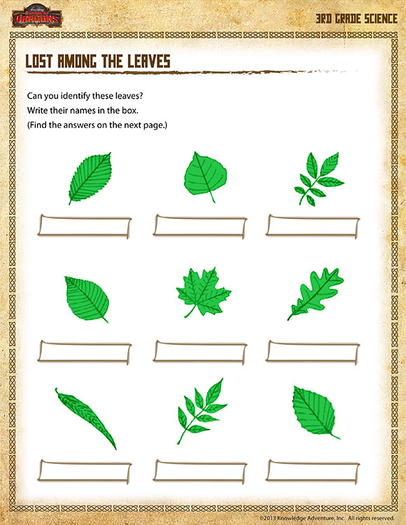 Lost Among The Leaves View –3rd Grade Science Worksheet