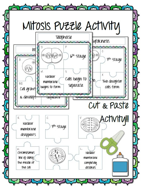 Mitosis Puzzle Worksheets