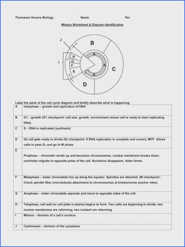 Mitosis Worksheet Diagram Identification  2751800